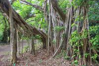 鹿児島県 ケンムンの散歩道 奄美大島