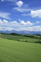 北海道 麦畑の丘と十勝岳連峰