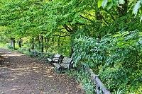 緑影のベンチ