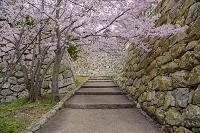 兵庫県 明石城と桜