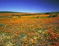 南アフリカ共和国 ノーザンケープ州 ナマクワランド スキルパ...