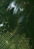 ブラジル アマゾンの森林伐採(1986年撮影)