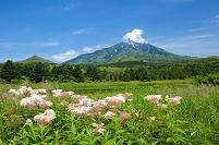 北海道 南浜湿原と利尻山