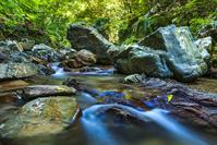 沖縄県 やんばるの渓流