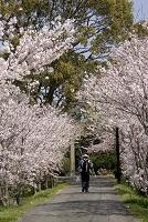 愛媛県 四国霊場第54番 栄福寺 桜並木の遍路道とお遍路さん