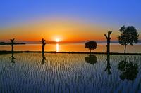 滋賀県 大津市 水田と琵琶湖の朝日