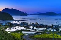 福井県 朝の日引の棚田 若狭湾
