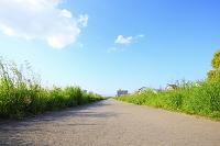 土手に続く直線の遊歩道