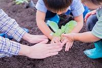 畑で野菜苗を植える日本人母子の手