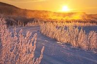 北海道 日の出と霧氷の道