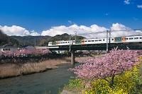 静岡県  河津町