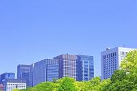 東京都 新緑と丸の内のビル群