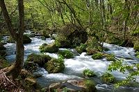 青森県 十和田市 奥入瀬渓流 三乱の流れ