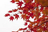 北海道 晩秋の色