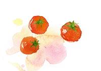 水彩画 プチトマト