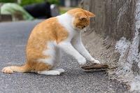 福岡県 猫