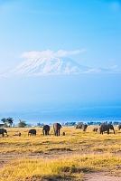 キリマンジャロと象 ケニア アンボセリ