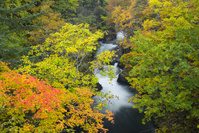 北海道 紅葉の定山渓