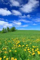 北海道 草原と新緑の木立