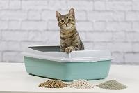 子猫のトイレ