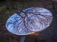 倒れたコーナーミラーに映る冬枯れの木