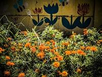 マリーゴールドの花とチューリップが描かれた壁