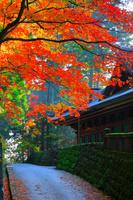 栃木県 日光輪王寺大護摩堂と赤モミジ