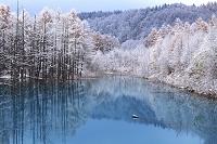 北海道 カラマツと沼