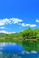 新潟県 笹ヶ峰高原 初夏の清水ヶ池