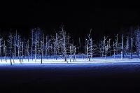 北海道 美瑛町 青い池ライトアップ