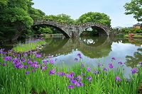 長崎県諫早市 眼鏡橋と菖蒲