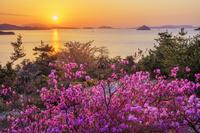 岡山県 ミツバツツジ咲く鷲羽山より瀬戸内海と朝日