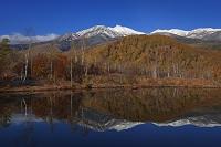 長野県 乗鞍高原 紅葉のまいめの池と乗鞍岳