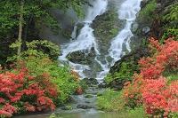 群馬県 チャツボミゴケ公園