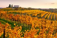 イタリア コッリオ ブドウ畑
