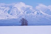 北海道 5本の松と十勝岳連峰