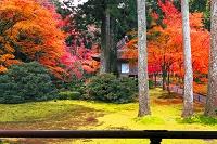 京都府 紅葉の三千院