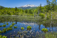 長野県 新緑のどじょう池
