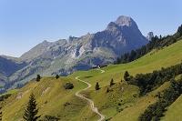 オーストリア フォアアールベルク州 ブレゲンツの森