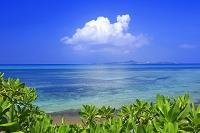 沖縄県 備瀬のサンゴ礁の海