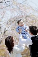 桜の咲く公園で息子を抱き上げる両親
