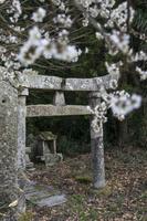 梅の花と石鳥居