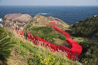 山口県 元乃隅稲成神社と日本海