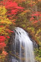 秋田県 鹿角市 湯の又の滝と紅葉