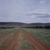 道とオリーブ畑