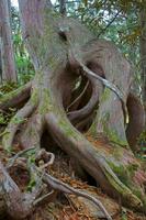 長野県 爺ケ岳下部の自然林
