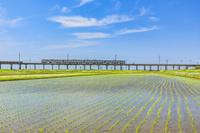 千葉県 水田と鉄道