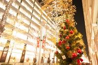 クリスマスイルミネーションとツリー