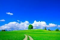 オーストリア 草原