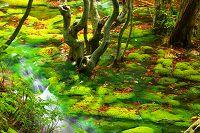 秋田県 獅子ケ鼻湿原の鳥海マリモ